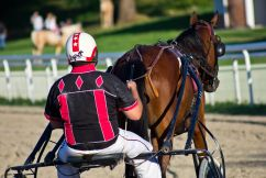 Race Fixing in QLD Harness Racing Industry