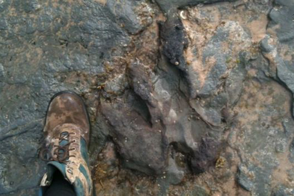 Article image for Australian dinosaur footprint damaged by vandals