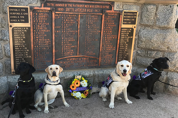 Article image for Dogs trained by inmates lead Anzac Day march