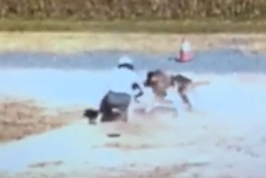 WATCH   Woman desperately wrestles to save her dog's life