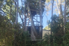 Greenslopes family fight to save beloved treehouse from Energex