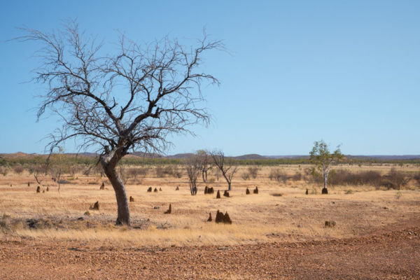 Article image for Drought coordinator can't explain where our donations are going