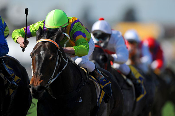 Article image for QLD racing industry threatens to strike over government's new gambling tax