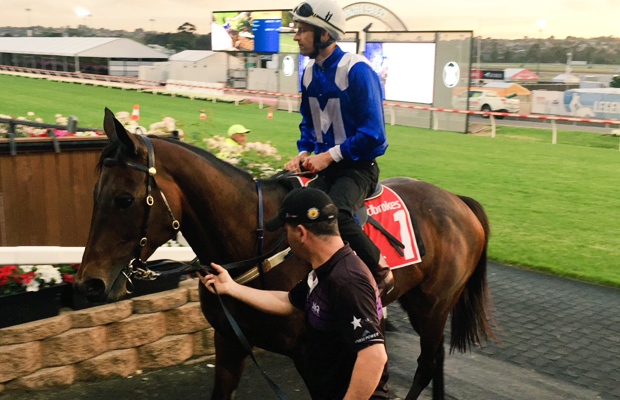 Article image for Hundreds flock to watch Winx tune up for historic Cox Plate