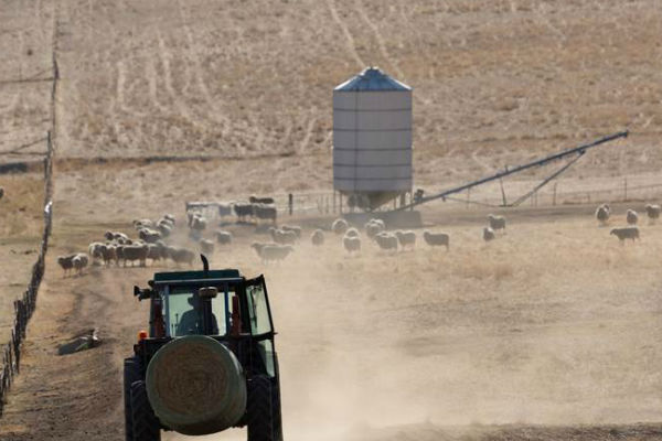 Article image for Farmers continue to struggle through nation's worst drought