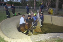 Firefighters rescue elderly horse trapped in swimming pool