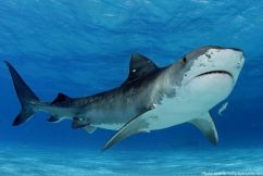 Whitsunday shark round table looks for answers