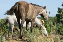Chris Smith's pressure to stop brumby cull has worked… for now