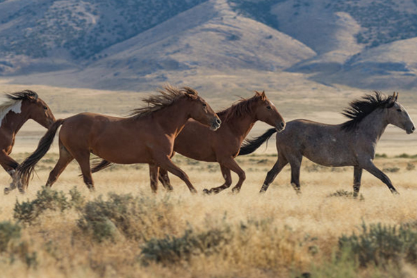 Article image for State MP calls on Minister to stop 'unacceptable' culling of wild brumbies