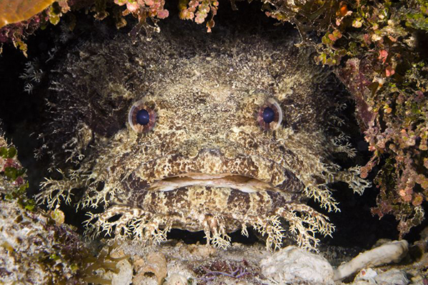 Article image for A toadfish could be responsible for viscous 'shark' attack