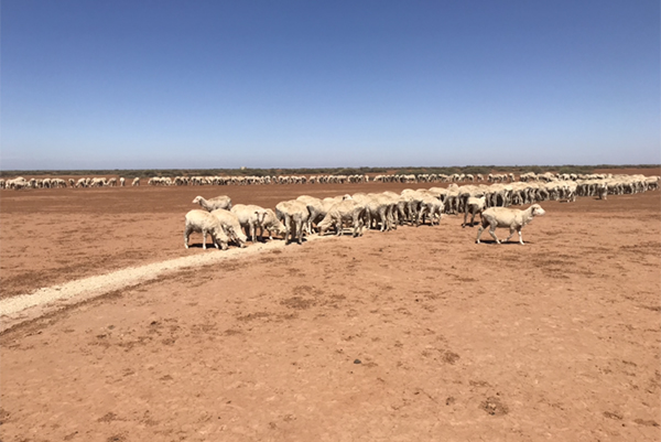 Article image for 'We're in trouble': Drought-stricken farmers say more assistance is needed