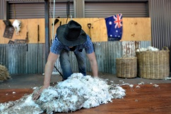 Wool prices slump to 5 year low