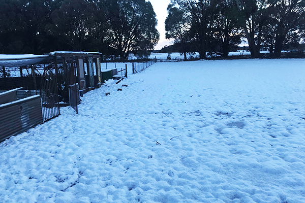 Article image for 'Beautiful white wonderland': Snow blankets the Southern Tablelands