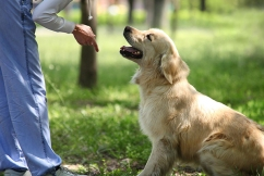 You can't 'walk your pets fit', so how do you prevent their obesity?