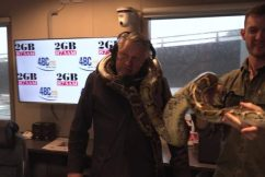 WATCH | Ray Hadley meets Fluffy… the gigantic Burmese python