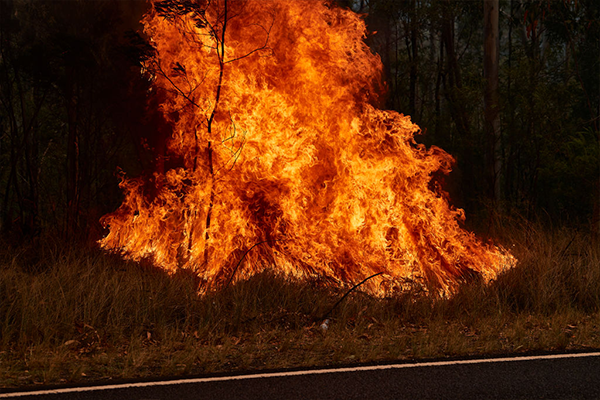 Article image for 'This is a form of domestic terrorism': Deliberately lit fires risking life and property