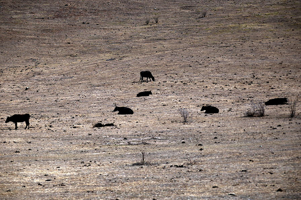 Article image for RSPCA defends seizing cattle from drought-stricken farmers