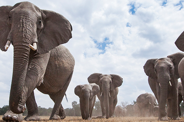 Article image for Australian tourist killed by elephant in Africa