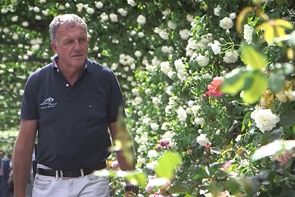 Article image for How to grow the perfect rose according to the keeper of Flemington's famous gardens