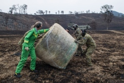 Smoke slows air-dropping of fodder in fire impacted communities
