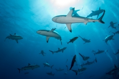 Shark control measures returning to Great Barrier Reef beaches
