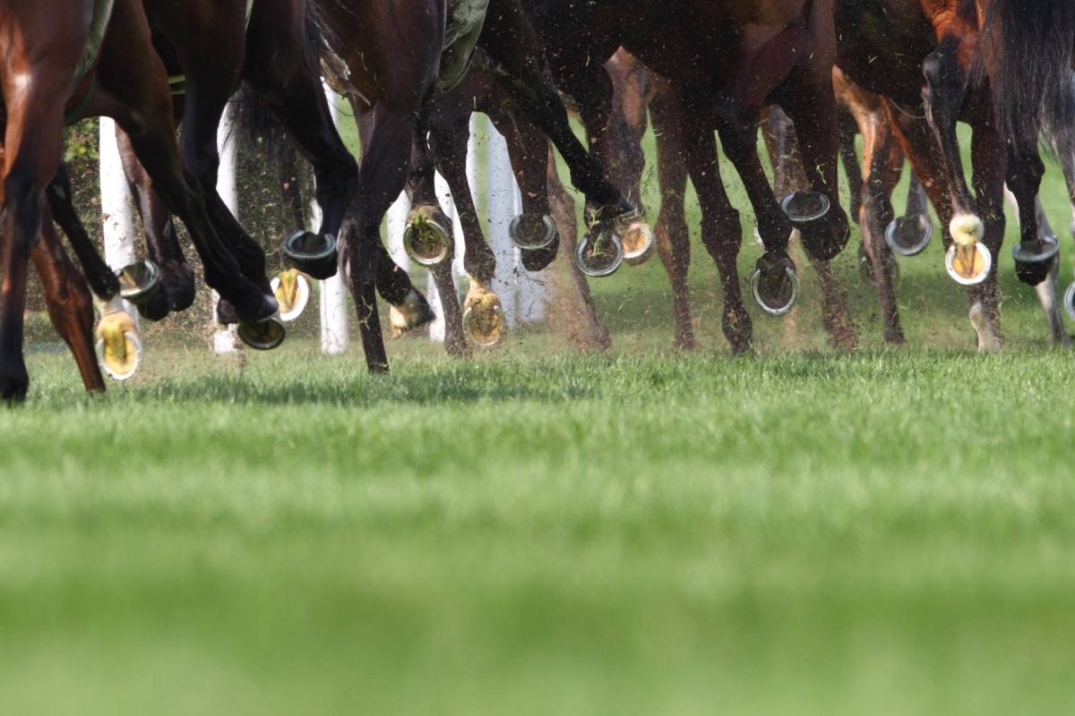 Article image for Breaking racing news: Thirteen trainers charged in QLD investigation