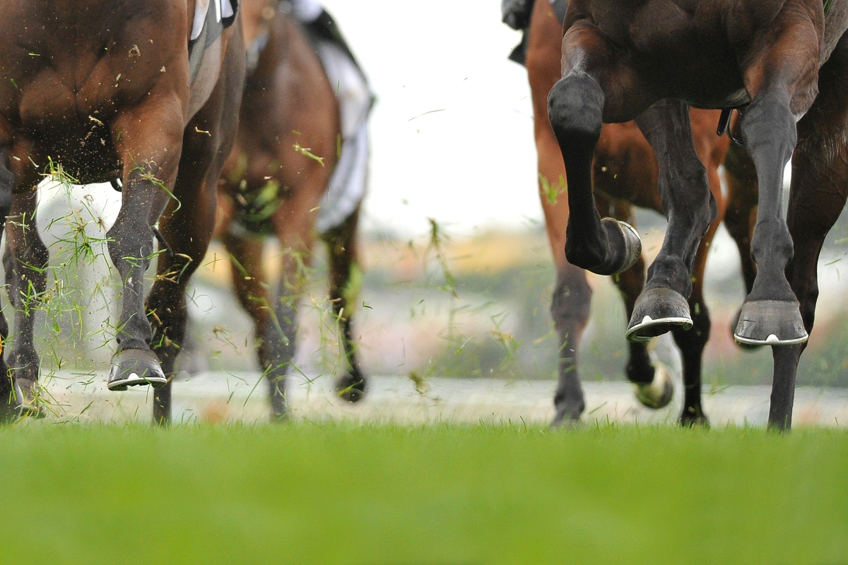 Article image for The 'surreal' look of the Melbourne Cup from a jockey's perspective