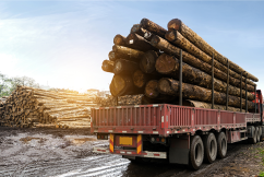 Is timber the next toilet paper?