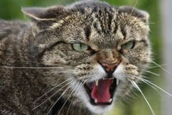 The battle our native wildlife face with our cats