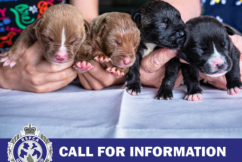 'Beyond belief': Litter of abandoned puppies found in a plastic bag