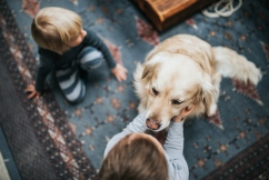 Aussie dog owners spending big on their furry friends