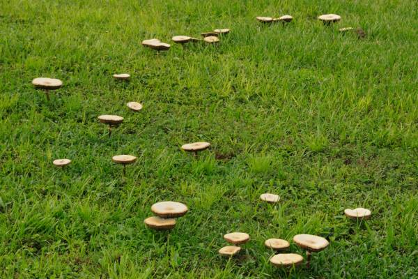 Article image for Signs your pet might have eaten a poisonous mushroom