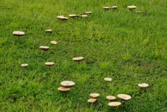 Warnings over potentially toxic, brightly coloured mushrooms