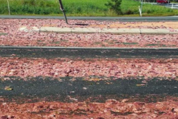 Article image for Massive clean up operation after chicken guts spill onto highway