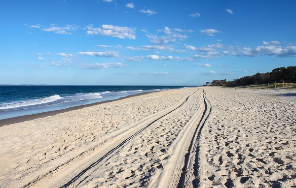 Article image for Birds deliberately 'mowed down' by 4WD on Bribie Island beach