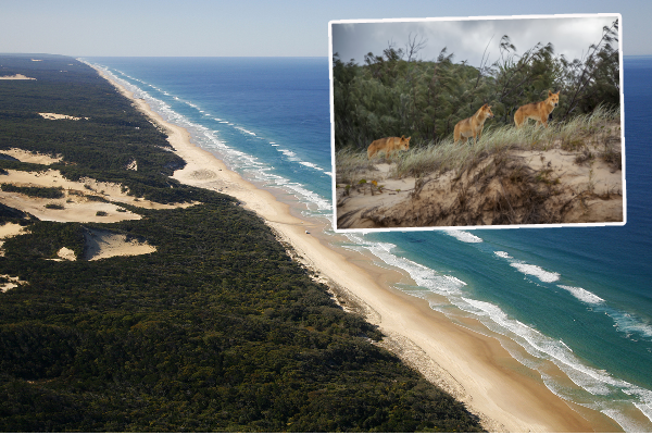 Article image for Dire warning after another attack on a young child at Fraser Island