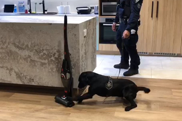 Article image for The tech dogs helping sniff out dangerous criminals