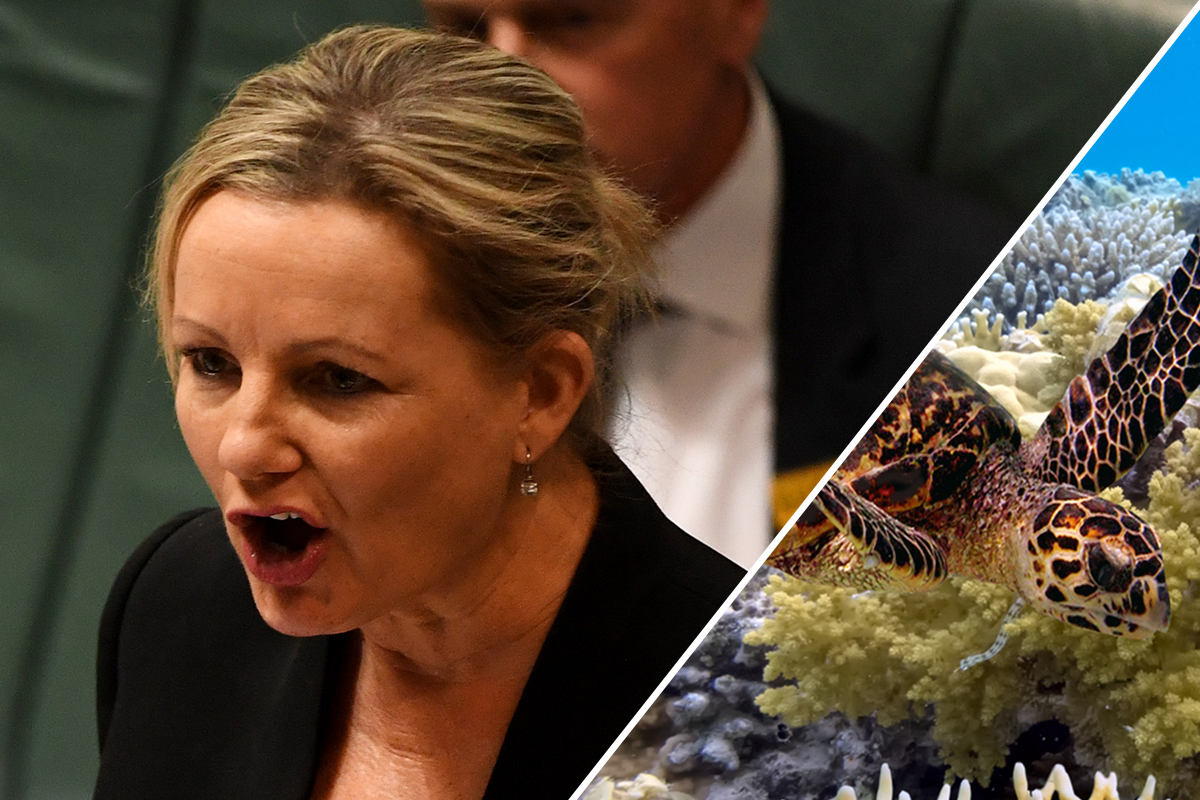 Article image for Australia blindsided by UN push to downgrade Great Barrier Reef