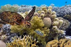 Why Australia's nonchalance could doom Great Barrier Reef to reputation loss