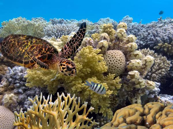 Article image for Why Australia's nonchalance could doom Great Barrier Reef to reputation loss