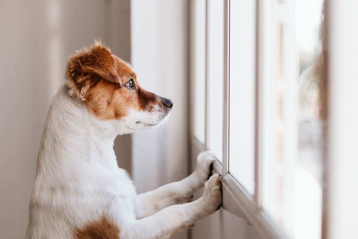 Article image for How to teach your dog to cope while home alone