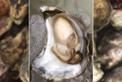 Perseverance in face of disaster gains Tathra oyster farmers national recognition