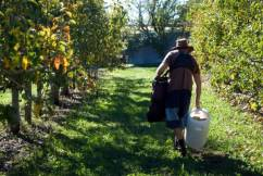 How Queensland growers have adapted after critical worker shortage
